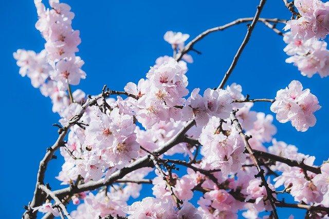 春の季語一覧