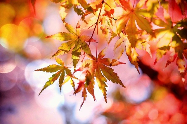 秋の季語一覧